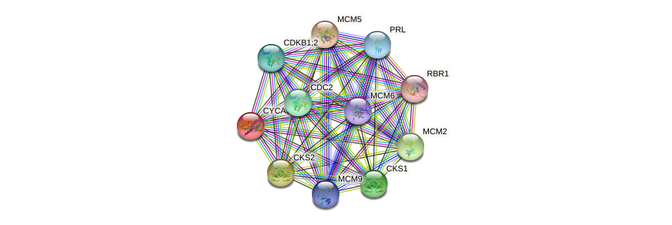 CYCA3;4 protein (Arabidopsis thaliana) - STRING interaction network