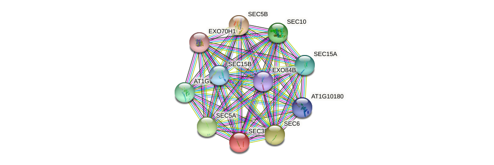 SEC3B protein (Arabidopsis thaliana) - STRING interaction network