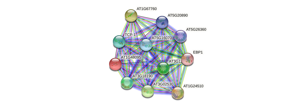 AT1G48095 protein (Arabidopsis thaliana) - STRING interaction network
