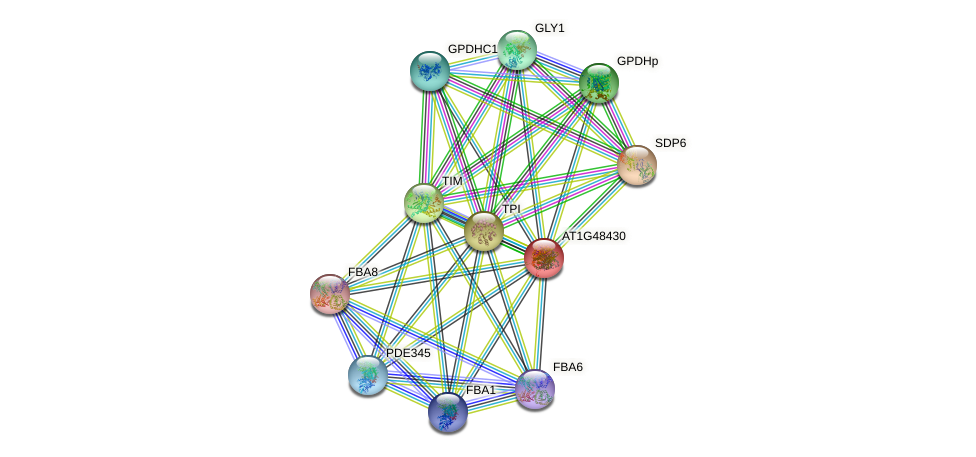 AT1G48430 protein (Arabidopsis thaliana) - STRING interaction network