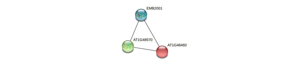 AT1G48460 protein (Arabidopsis thaliana) - STRING interaction network