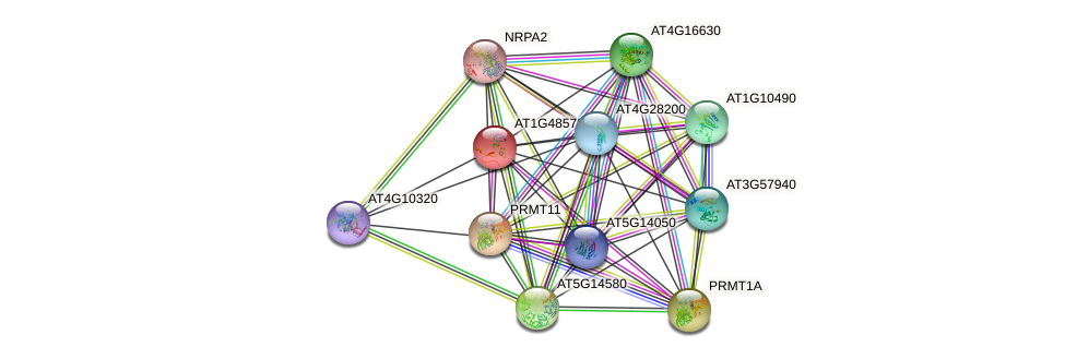AT1G48570 protein (Arabidopsis thaliana) - STRING interaction network