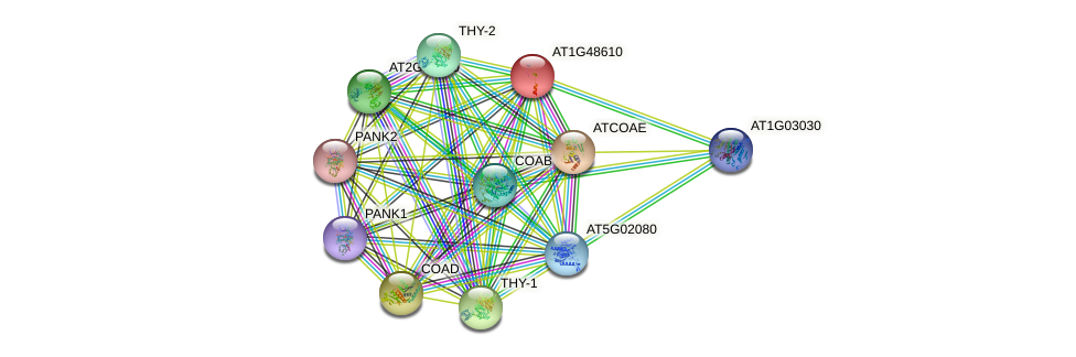 AT1G48610 protein (Arabidopsis thaliana) - STRING interaction network