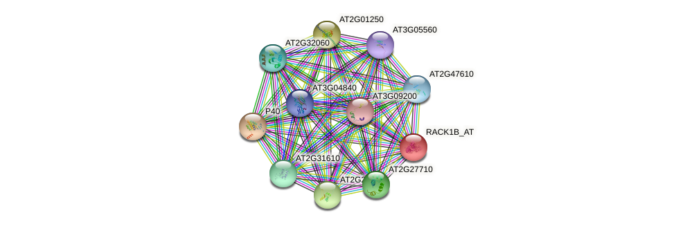 RACK1B_AT protein (Arabidopsis thaliana) - STRING interaction network