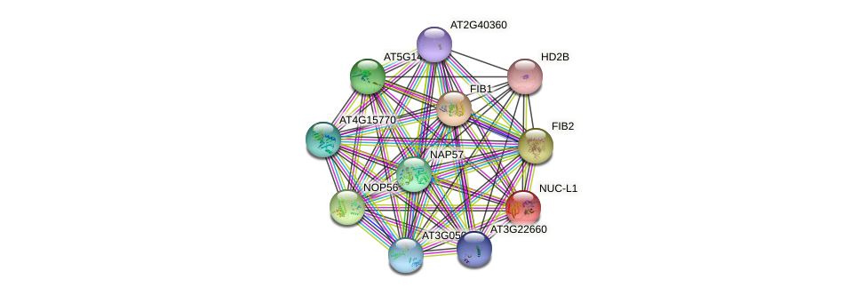 NUC-L1 protein (Arabidopsis thaliana) - STRING interaction network
