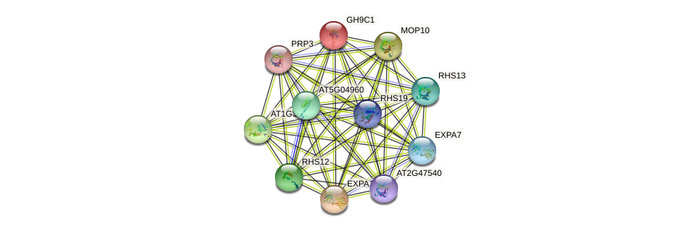 GH9C1 protein (Arabidopsis thaliana) - STRING interaction network