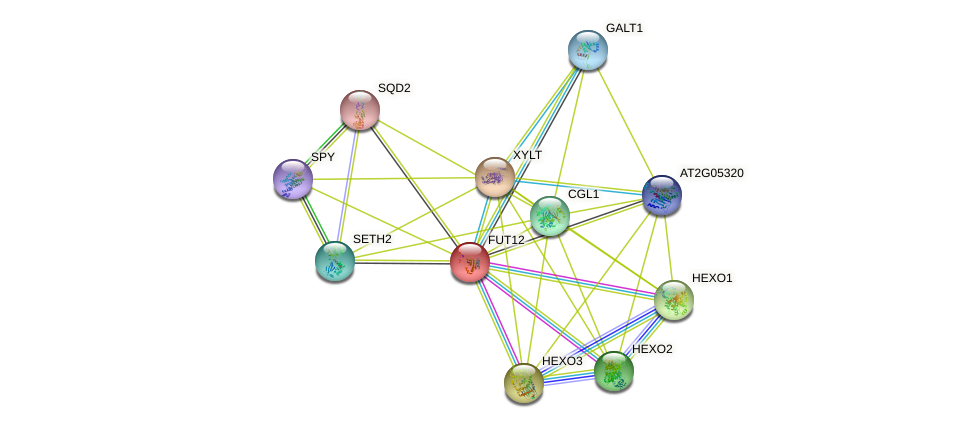 FUT12 protein (Arabidopsis thaliana) - STRING interaction network