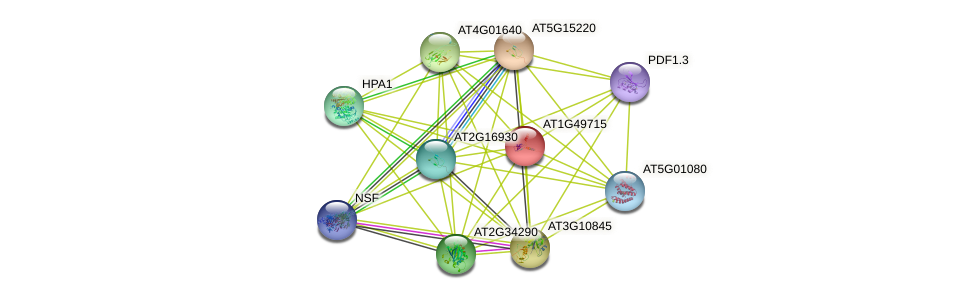 AT1G49715 protein (Arabidopsis thaliana) - STRING interaction network