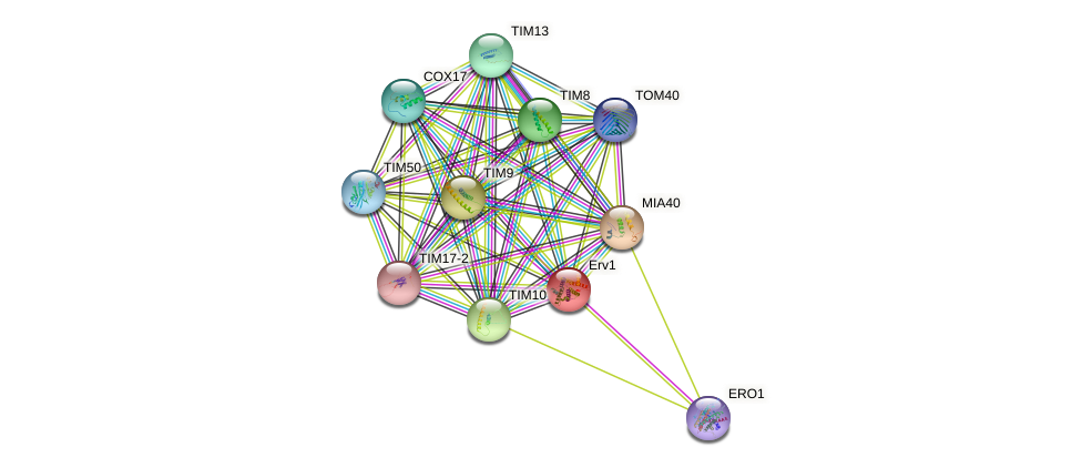 Erv1 protein (Arabidopsis thaliana) - STRING interaction network