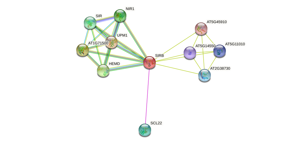 SIRB protein (Arabidopsis thaliana) - STRING interaction network
