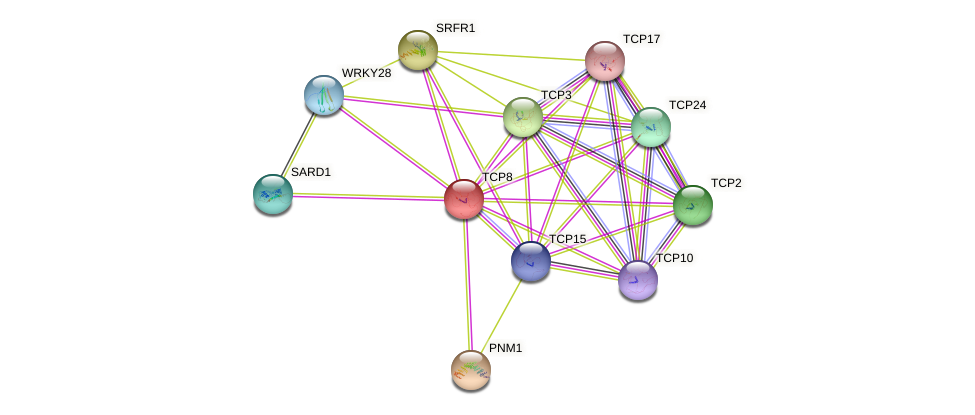 TCP8 protein (Arabidopsis thaliana) - STRING interaction network