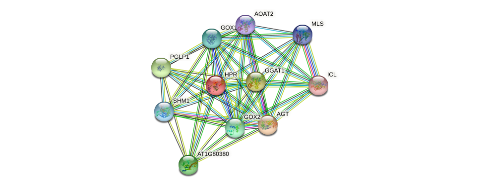 HPR protein (Arabidopsis thaliana) - STRING interaction network