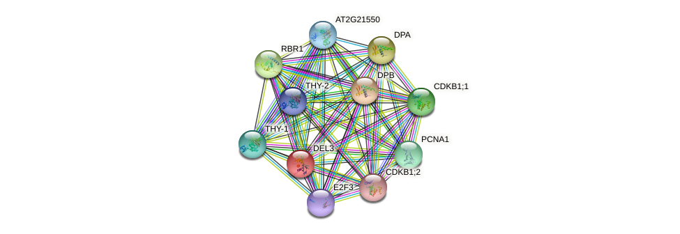 DEL3 protein (Arabidopsis thaliana) - STRING interaction network