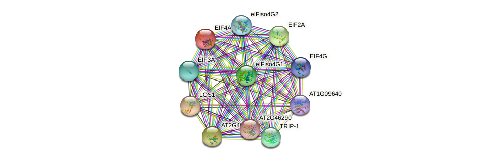 EIF4A1 protein (Arabidopsis thaliana) - STRING interaction network