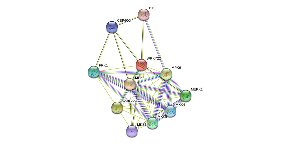 WRKY22 protein (Arabidopsis thaliana) - STRING interaction network