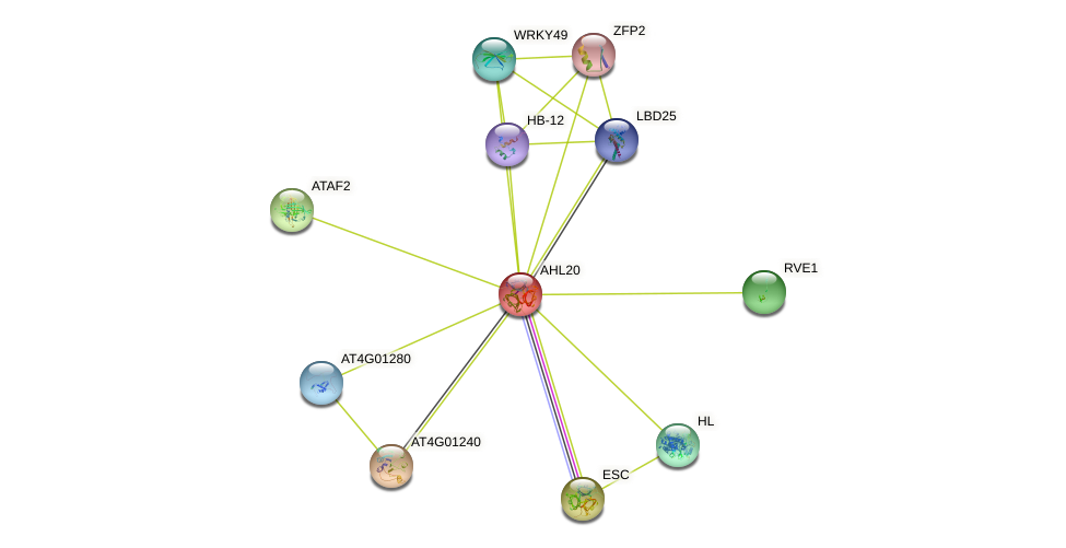 AHL20 protein (Arabidopsis thaliana) - STRING interaction network