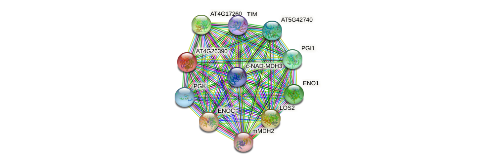 AT4G26390 protein (Arabidopsis thaliana) - STRING interaction network