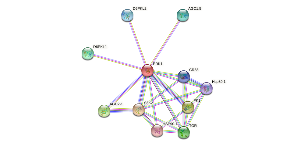 PDK1 protein (Arabidopsis thaliana) - STRING interaction network