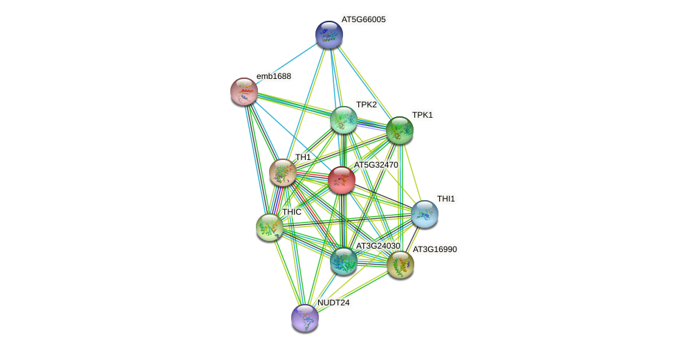 AT5G32470 protein (Arabidopsis thaliana) - STRING interaction network