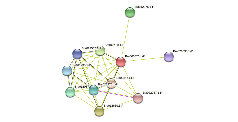Bra000026 protein (Brassica rapa) - STRING interaction network