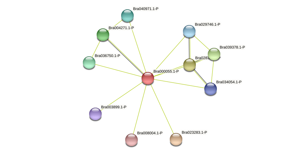 Bra000055 protein (Brassica rapa) - STRING interaction network