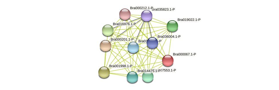 Bra000067 protein (Brassica rapa) - STRING interaction network