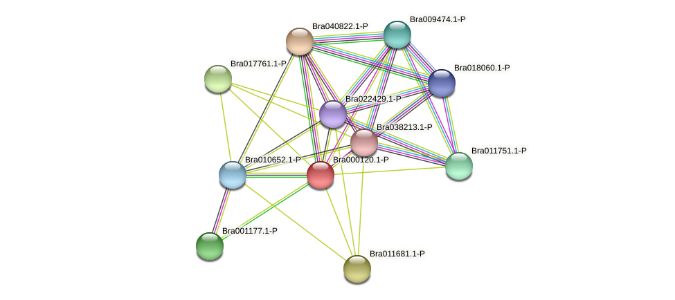 Bra000120 protein (Brassica rapa) - STRING interaction network