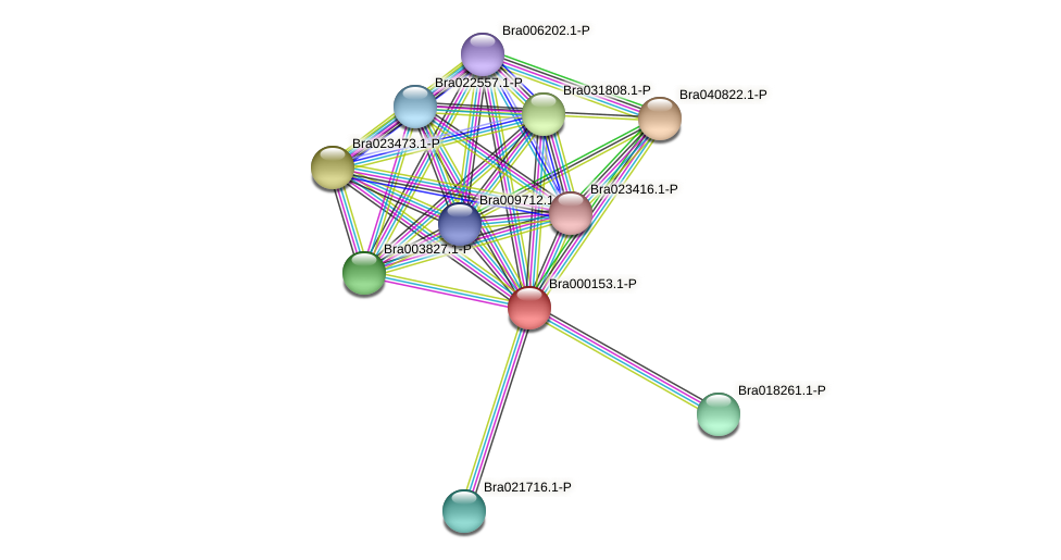 Bra000153 protein (Brassica rapa) - STRING interaction network