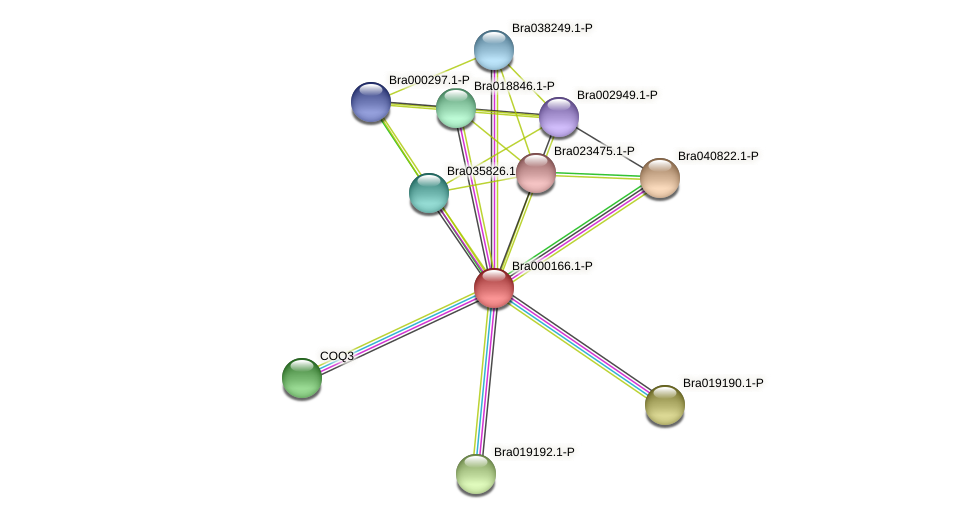 Bra000166 protein (Brassica rapa) - STRING interaction network