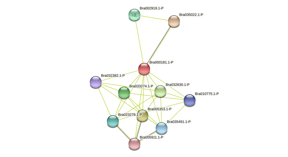 Bra000181 protein (Brassica rapa) - STRING interaction network