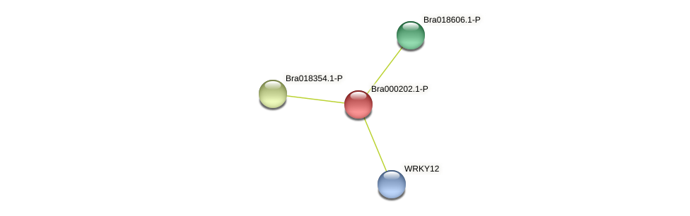 Bra000202 protein (Brassica rapa) - STRING interaction network