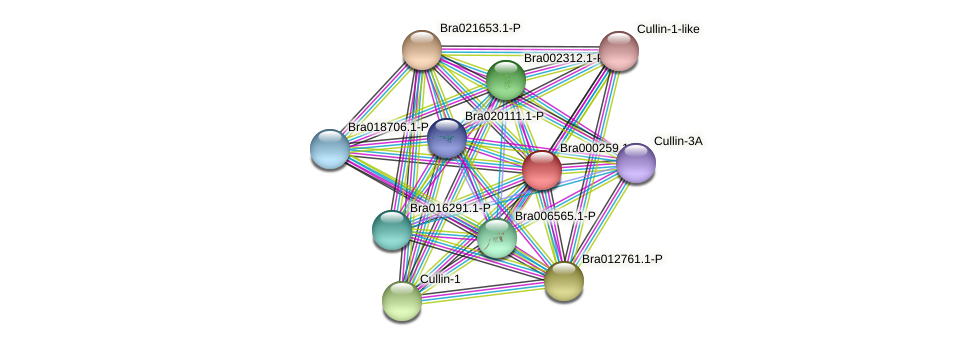 Bra000259 protein (Brassica rapa) - STRING interaction network