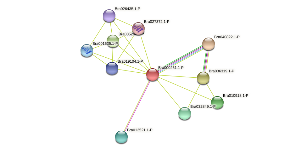 Bra000261 protein (Brassica rapa) - STRING interaction network