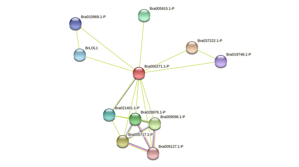 Bra000271 protein (Brassica rapa) - STRING interaction network