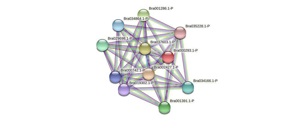 Bra000293 protein (Brassica rapa) - STRING interaction network
