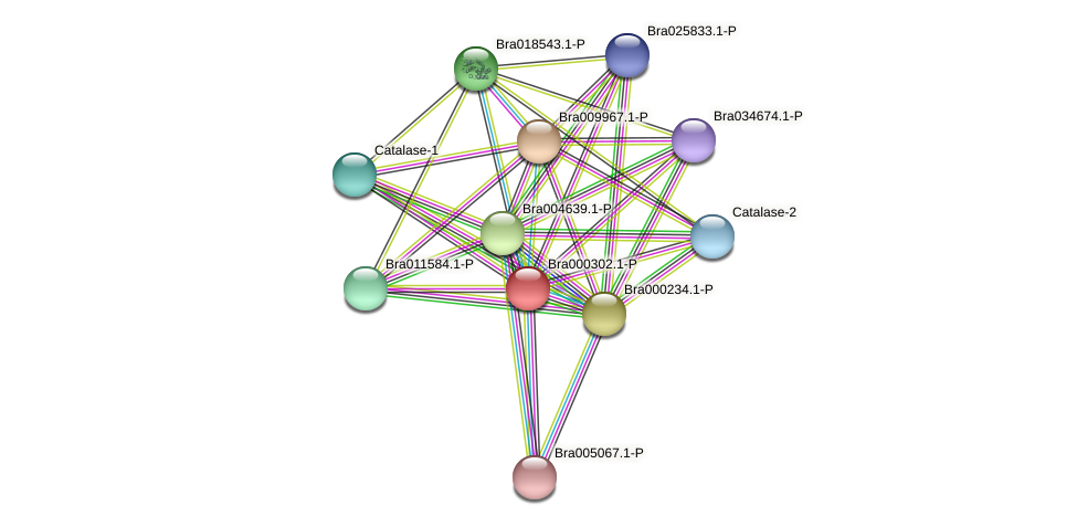 Bra000302 protein (Brassica rapa) - STRING interaction network