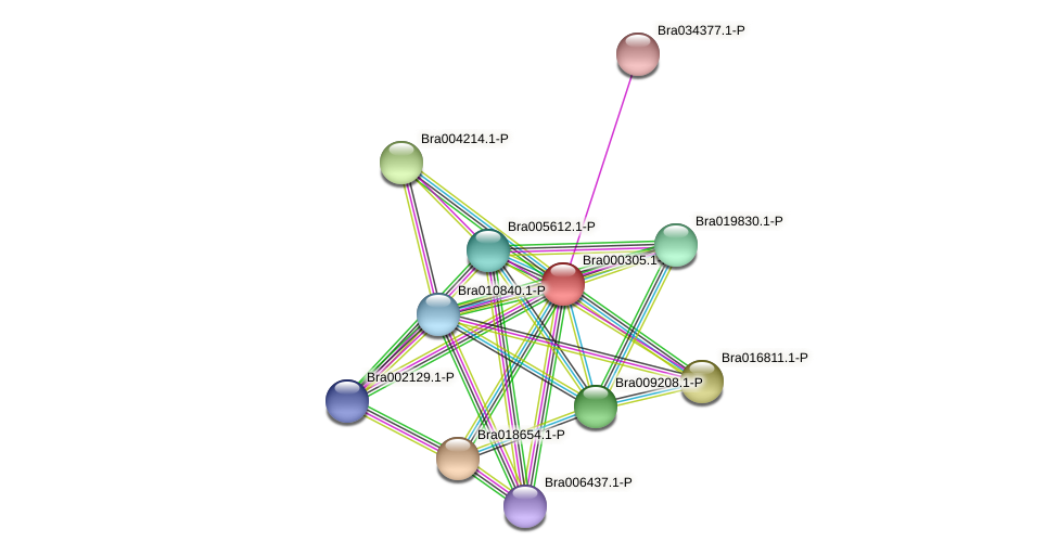 Bra000305 protein (Brassica rapa) - STRING interaction network