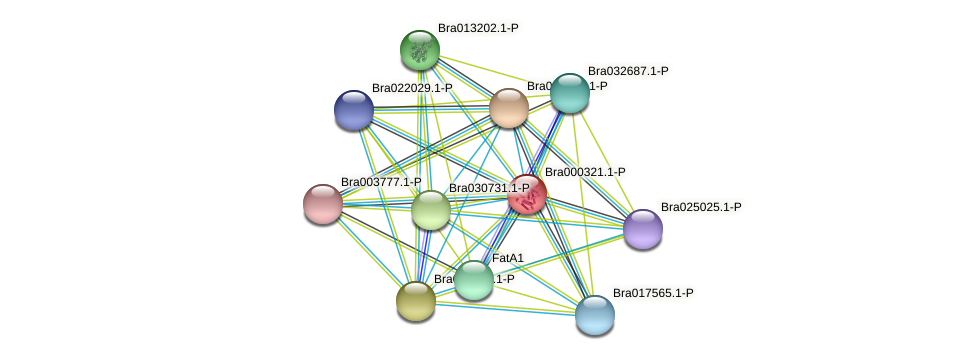 Bra000321 protein (Brassica rapa) - STRING interaction network