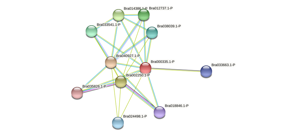 Bra000335 protein (Brassica rapa) - STRING interaction network