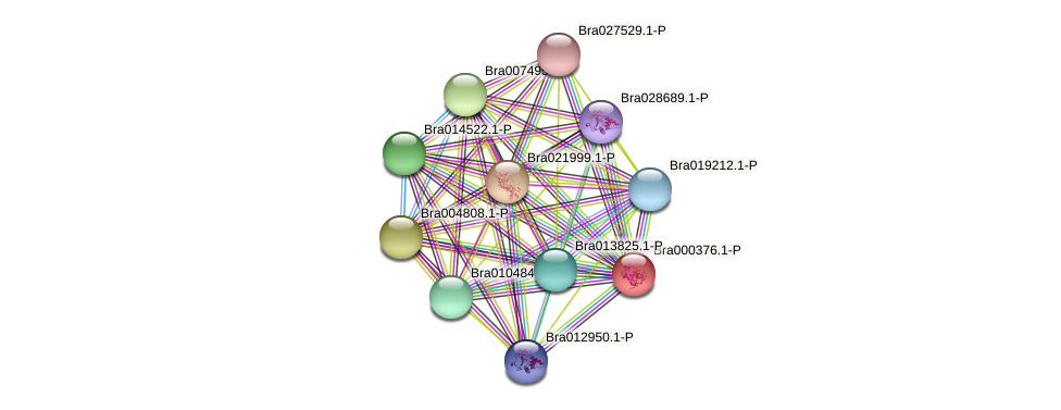 Bra000376 protein (Brassica rapa) - STRING interaction network