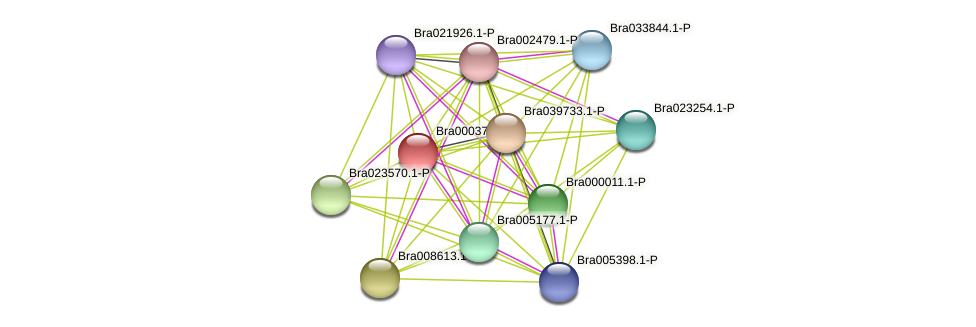 Bra000378 protein (Brassica rapa) - STRING interaction network