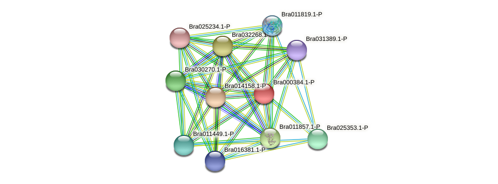 Bra000384 protein (Brassica rapa) - STRING interaction network