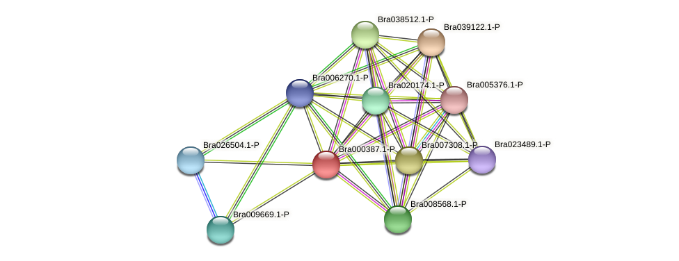 Bra000387 protein (Brassica rapa) - STRING interaction network