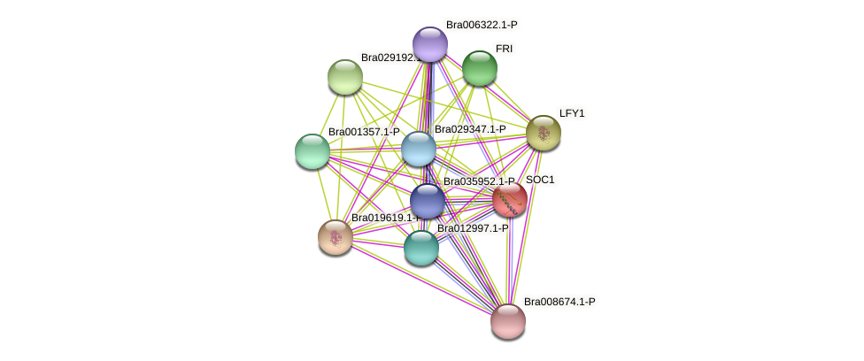 Bra000393 protein (Brassica rapa) - STRING interaction network