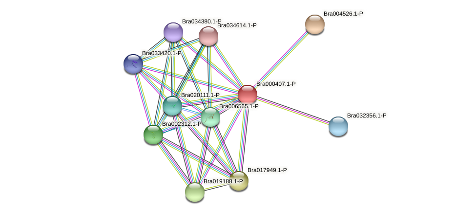 Bra000407 protein (Brassica rapa) - STRING interaction network