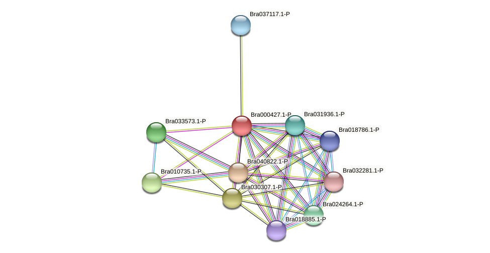 Bra000427 protein (Brassica rapa) - STRING interaction network