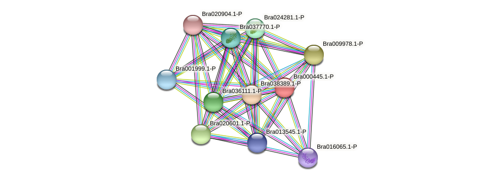 Bra000445 protein (Brassica rapa) - STRING interaction network