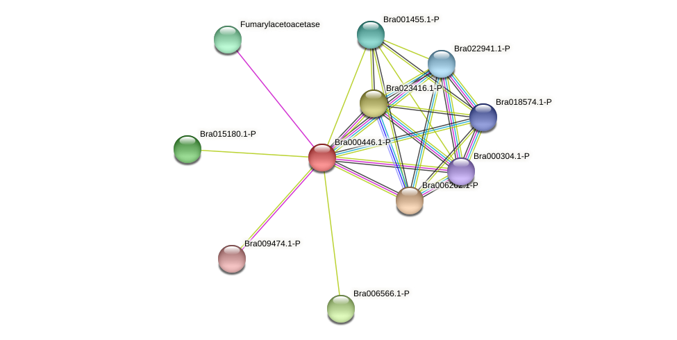 Bra000446 protein (Brassica rapa) - STRING interaction network