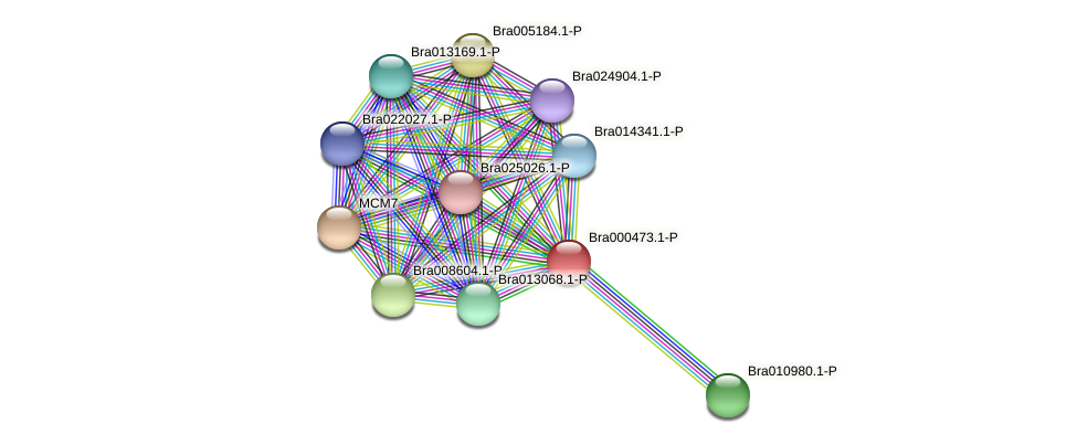 Bra000473 protein (Brassica rapa) - STRING interaction network