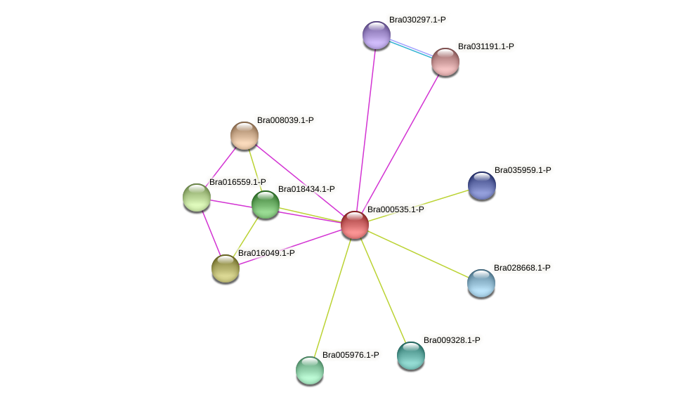 Bra000535 protein (Brassica rapa) - STRING interaction network